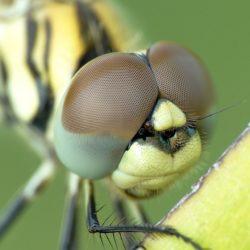 field biologist